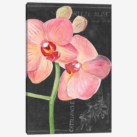 Chalkboard Flower I Canvas Print #JPP101} by Jennifer Paxton Parker Art Print
