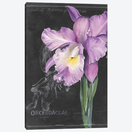 Chalkboard Flower II 3-Piece Canvas #JPP102} by Jennifer Paxton Parker Canvas Print