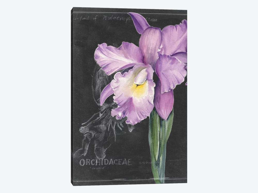 Chalkboard Flower II by Jennifer Paxton Parker 1-piece Canvas Art Print