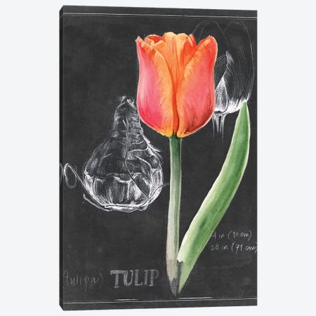 Chalkboard Flower III Canvas Print #JPP103} by Jennifer Paxton Parker Art Print