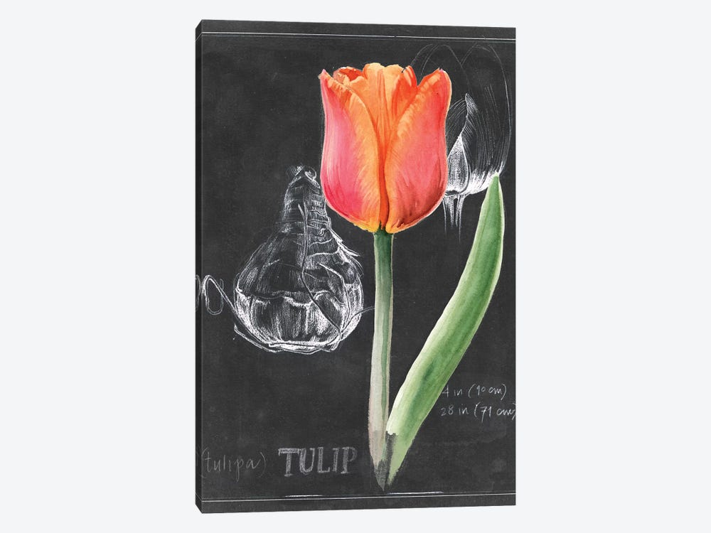 Chalkboard Flower III 1-piece Canvas Wall Art