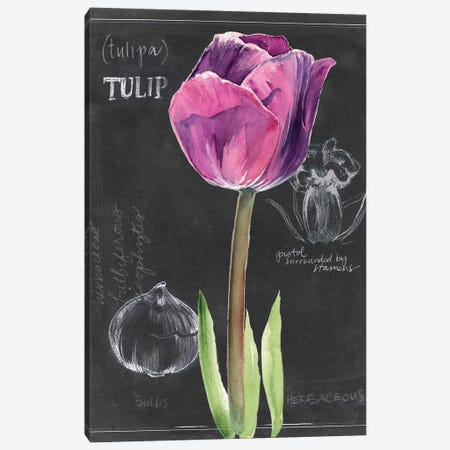 Chalkboard Flower IV Canvas Print #JPP104} by Jennifer Paxton Parker Canvas Art
