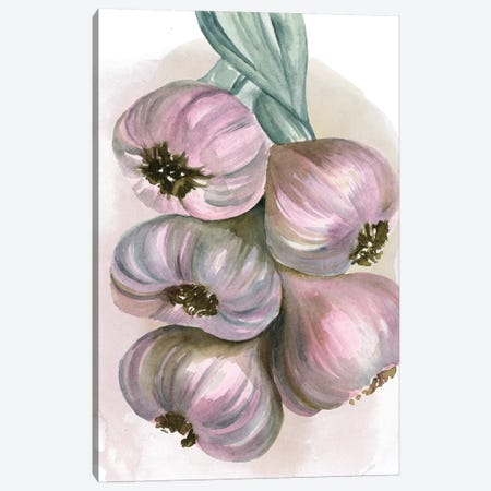 Garlic Braid II Canvas Print #JPP122} by Jennifer Paxton Parker Canvas Print