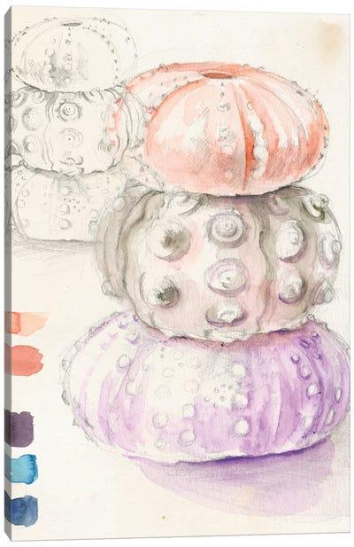 Sea Urchin Sketches I Canvas Art Print