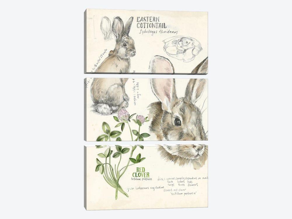 Wildlife Journals II by Jennifer Paxton Parker 3-piece Canvas Wall Art