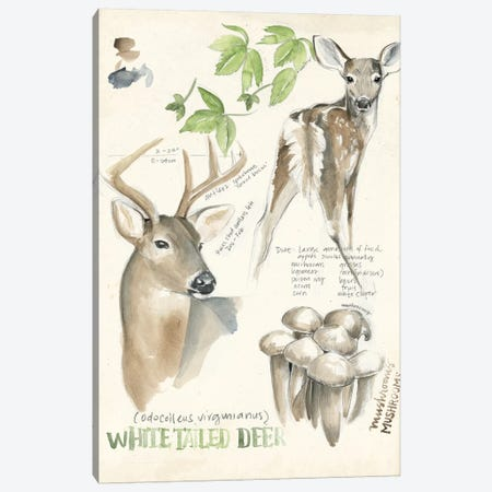 Wildlife Journals IV Canvas Print #JPP156} by Jennifer Paxton Parker Canvas Print