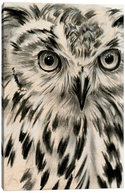 Charcoal Owl I Canvas Art Print
