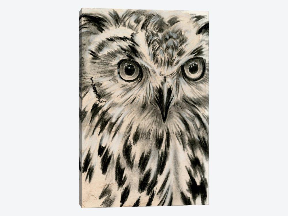 Charcoal Owl I Canvas Art By Jennifer Paxton Parker Icanvas