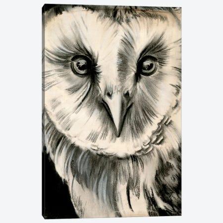 Charcoal Owl II Canvas Print #JPP160} by Jennifer Paxton Parker Canvas Art Print