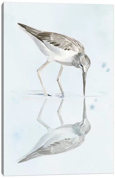 Sandpiper Reflections I Canvas Art Print