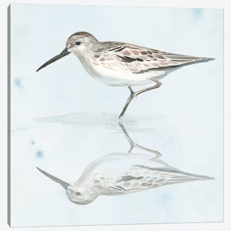 Sandpiper Reflections II Canvas Print #JPP190} by Jennifer Paxton Parker Canvas Art