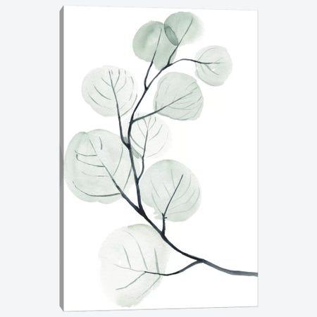 Silver Dollars I Canvas Print #JPP195} by Jennifer Paxton Parker Art Print