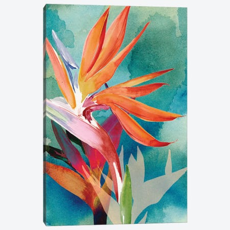 Vivid Birds of Paradise II Canvas Print #JPP202} by Jennifer Paxton Parker Canvas Artwork