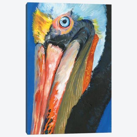 Vibrant Pelican I Canvas Print #JPP272} by Jennifer Paxton Parker Canvas Print