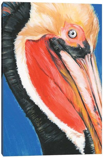 Vibrant Pelican II Canvas Art Print