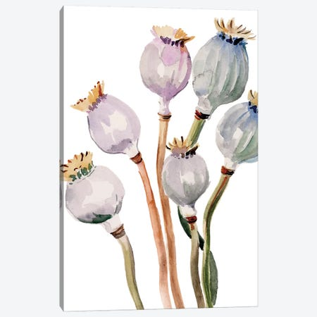 Watercolor Poppy Pods I Canvas Print #JPP274} by Jennifer Paxton Parker Canvas Art