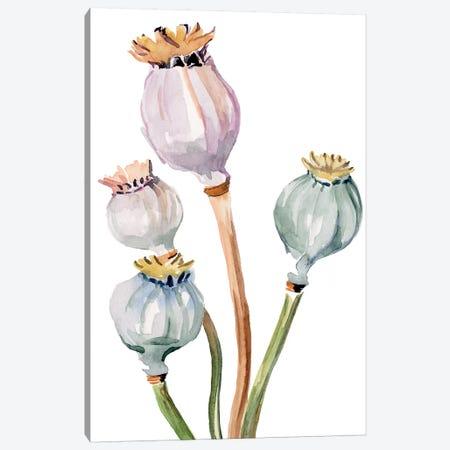 Watercolor Poppy Pods II Canvas Print #JPP275} by Jennifer Paxton Parker Canvas Artwork