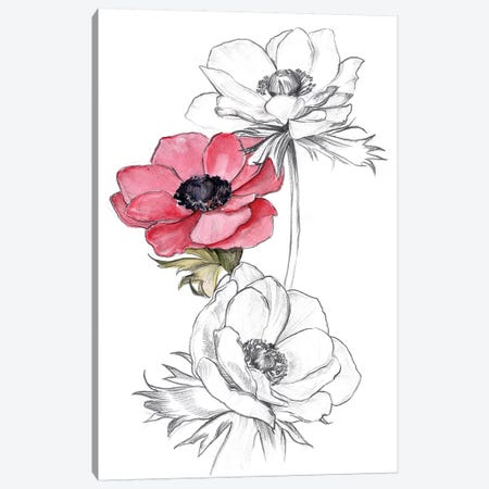 Anemone by Number II Canvas Print #JPP279} by Jennifer Paxton Parker Canvas Art Print