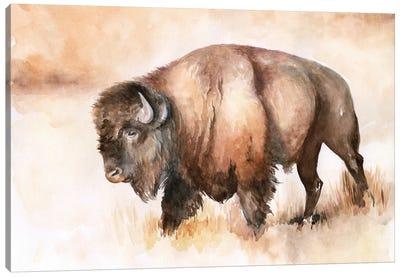 Buffalo Roam I Canvas Art Print