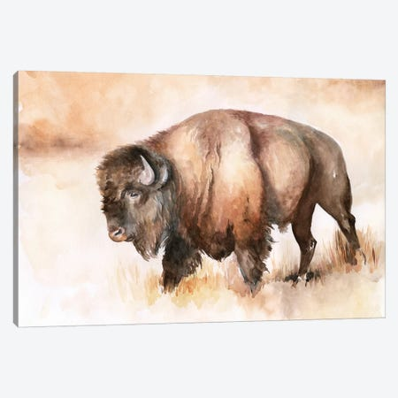 Buffalo Roam I Canvas Print #JPP285} by Jennifer Paxton Parker Art Print