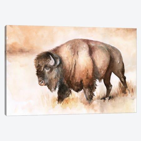 Buffalo Roam I Canvas Print #JPP285} by Jennifer Paxton Parker Art Print