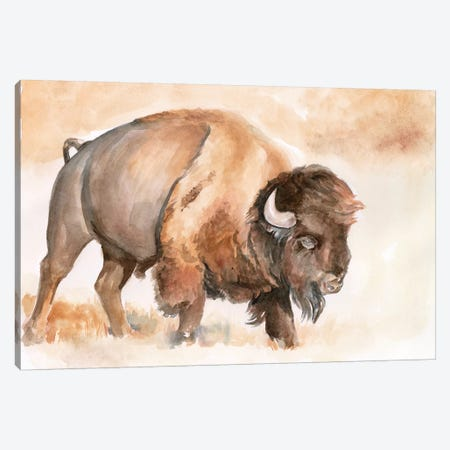 Buffalo Roam II Canvas Print #JPP286} by Jennifer Paxton Parker Canvas Art Print