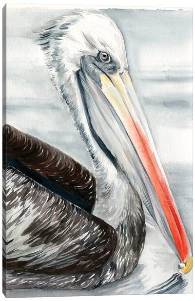 Grey Pelican I Canvas Art Print
