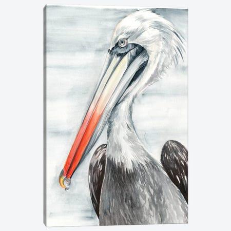 Grey Pelican II Canvas Print #JPP306} by Jennifer Paxton Parker Canvas Wall Art
