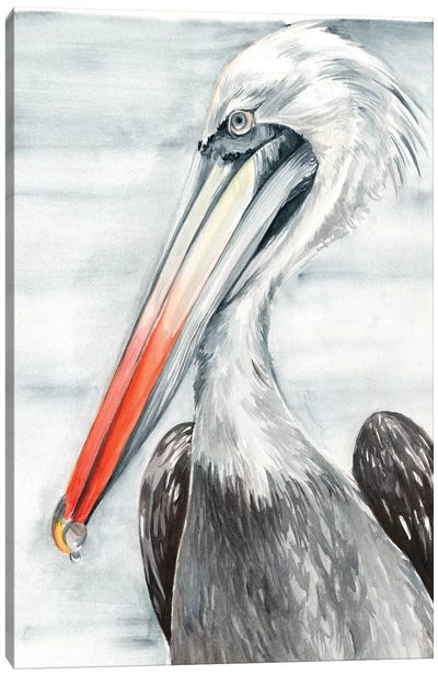 Grey Pelican II Canvas Art Print