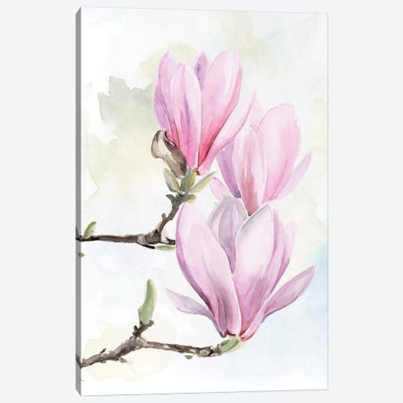 Magnolia Blooms I 3-Piece Canvas #JPP309} by Jennifer Paxton Parker Canvas Art Print