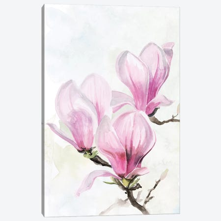 Magnolia Blooms II Canvas Print #JPP310} by Jennifer Paxton Parker Canvas Artwork