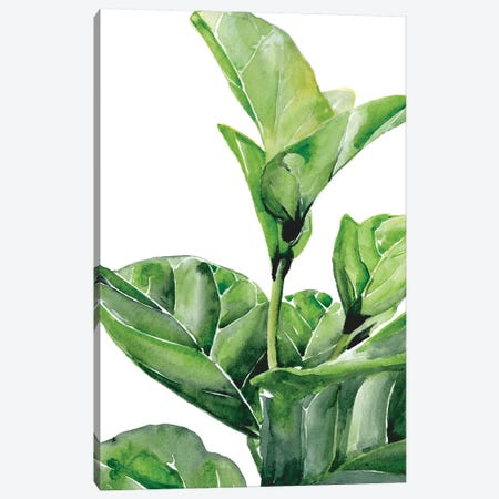 Fiddle Fig I Canvas Print #JPP394} by Jennifer Paxton Parker Art Print