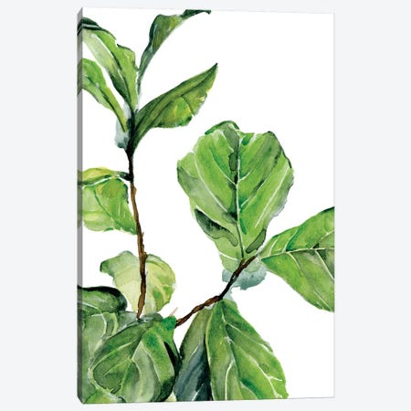 Fiddle Fig II Canvas Print #JPP395} by Jennifer Paxton Parker Art Print