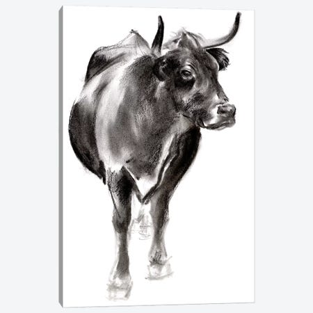 Charcoal Cattle I Canvas Print #JPP464} by Jennifer Paxton Parker Canvas Art Print