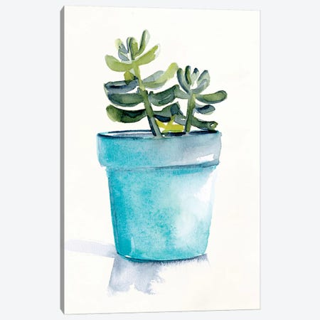 Potted Succulent II Canvas Print #JPP477} by Jennifer Paxton Parker Canvas Artwork