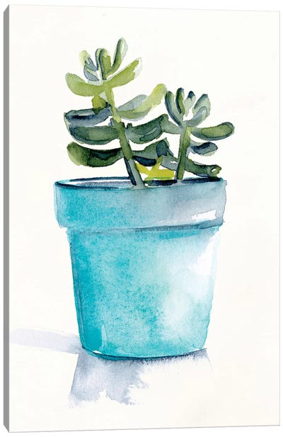 Potted Succulent II Canvas Art Print