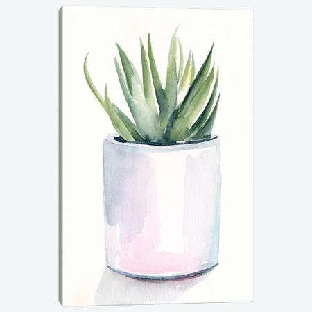 Potted Succulent III Canvas Print #JPP478} by Jennifer Paxton Parker Canvas Print