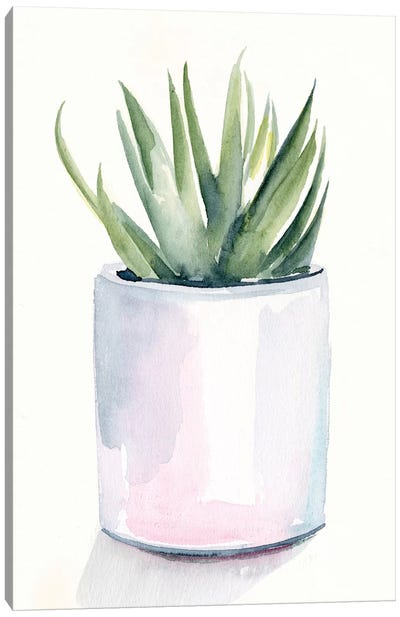Potted Succulent III Canvas Art Print