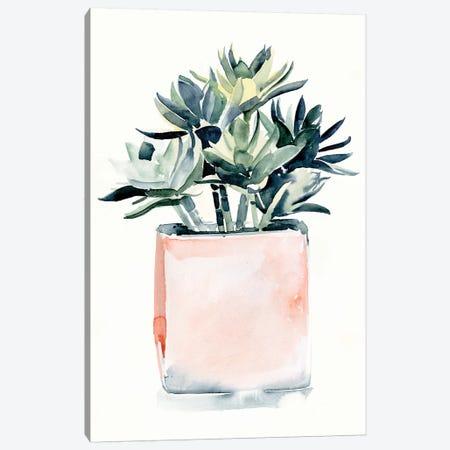 Potted Succulent IV Canvas Print #JPP479} by Jennifer Paxton Parker Canvas Print
