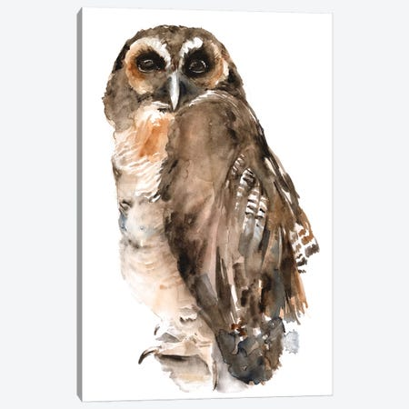 Watercolor Owl I Canvas Print #JPP482} by Jennifer Paxton Parker Canvas Art