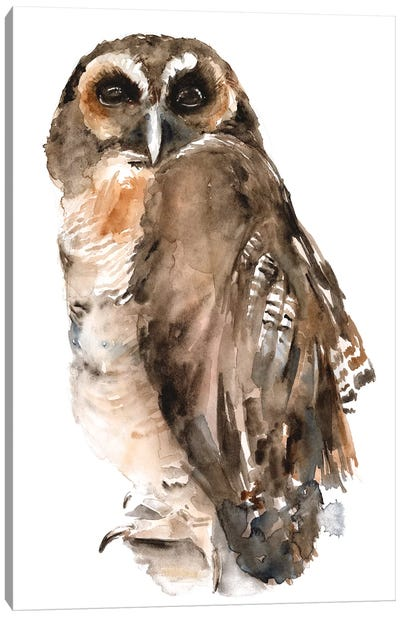 Watercolor Owl I Canvas Art Print
