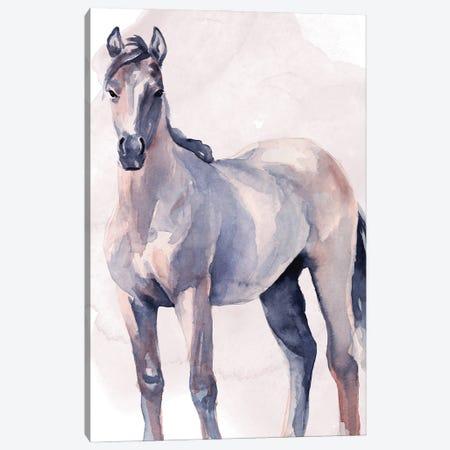 Horse in Watercolor II Canvas Print #JPP491} by Jennifer Paxton Parker Art Print