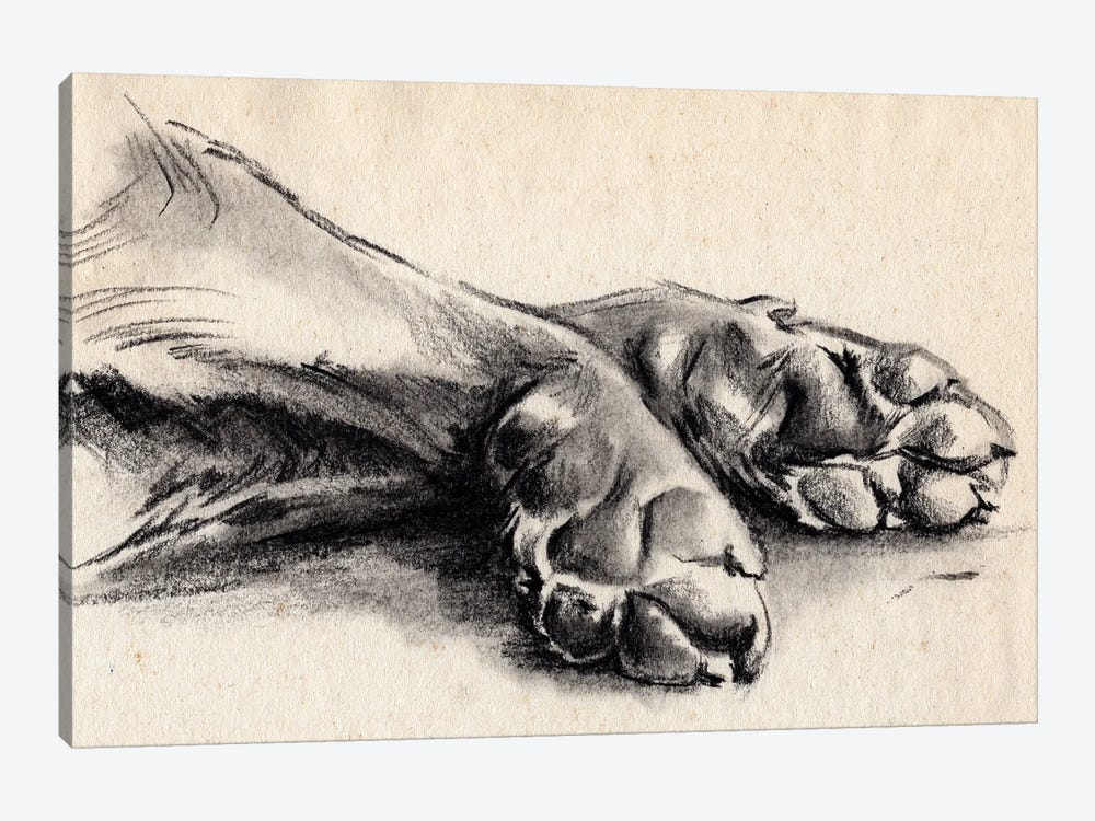 Charcoal Paws II by Jennifer Paxton Parker 1-piece Canvas Art Print
