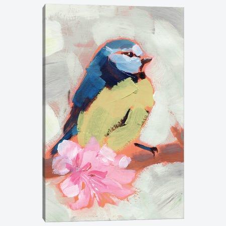 Painted Songbird II Canvas Print #JPP505} by Jennifer Paxton Parker Canvas Artwork