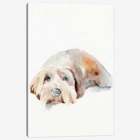 Scruffy Puppy II Canvas Print #JPP511} by Jennifer Paxton Parker Canvas Artwork