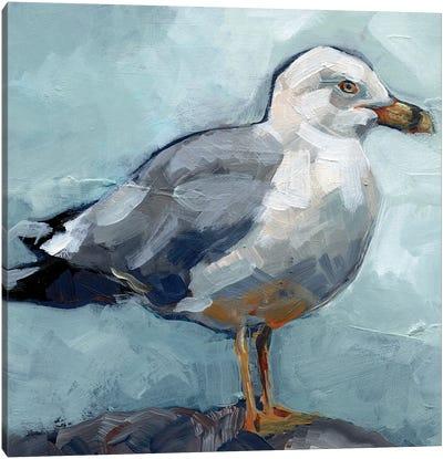 Seagull Stance I Canvas Art Print