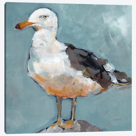 Seagull Stance II Canvas Print #JPP513} by Jennifer Paxton Parker Canvas Wall Art