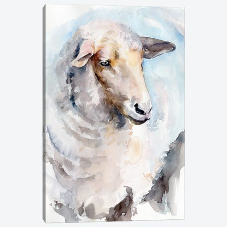 Watercolor Sheep I Canvas Print #JPP514} by Jennifer Paxton Parker Canvas Print