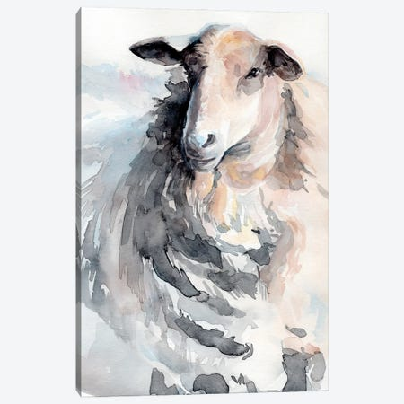 Watercolor Sheep II Canvas Print #JPP515} by Jennifer Paxton Parker Canvas Art Print