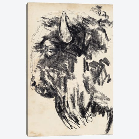Bison Head Gesture II Canvas Print #JPP523} by Jennifer Paxton Parker Canvas Art Print